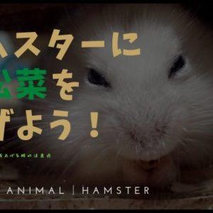 ハムスターへの小松菜の与え方!茎もいい?量は?など詳しく紹介!