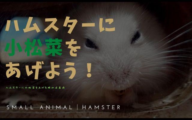ハムスターに小松菜をあげよう!画像