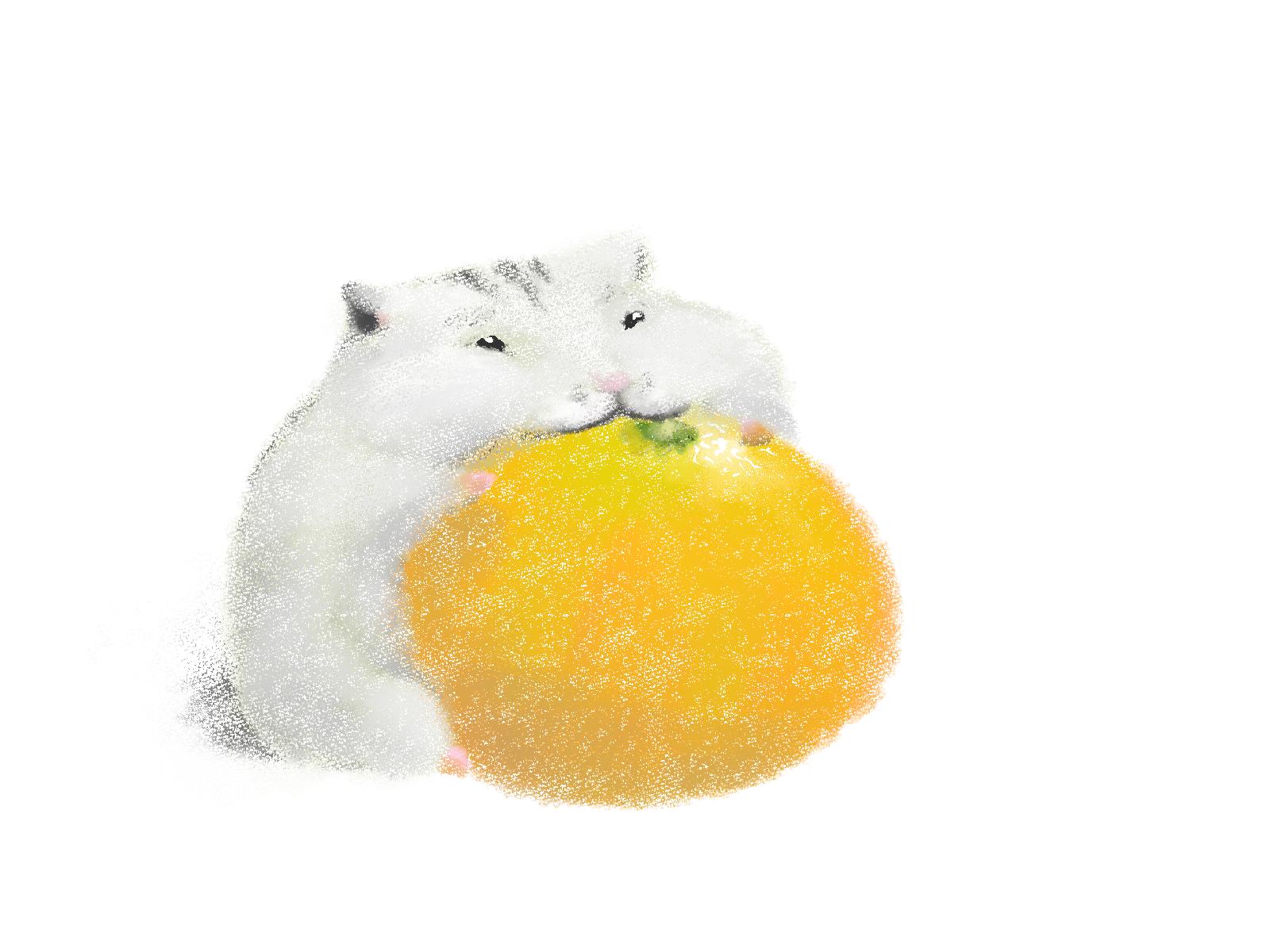 ハムスターはみかんやオレンジを食べられます