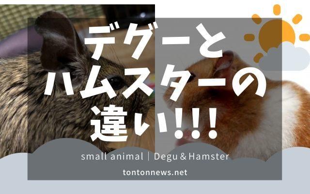 デグーとハムスターの違い!飼いやすいのはどっち?