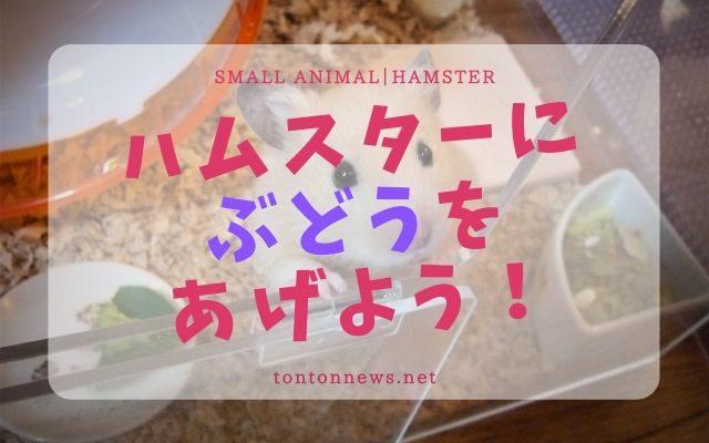 ハムスターにぶどうをあげよう!の画像
