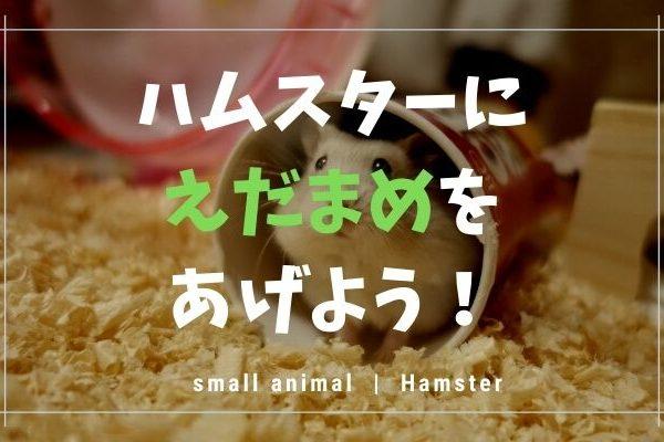 ハムスタは枝豆を食べられます!しかし注意点もあるので紹介します