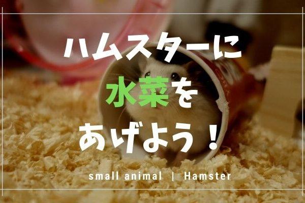 ハムスターに水菜はあげてもOK!量や注意点まとめるので、みてね