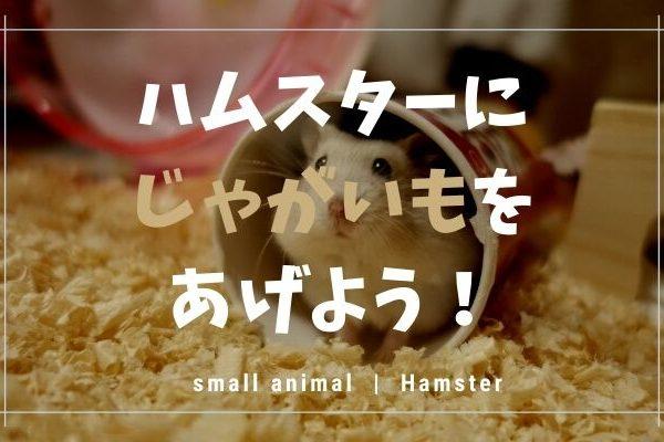 ハムスターはじゃがいもを食べます!あげる量や注意点を紹介