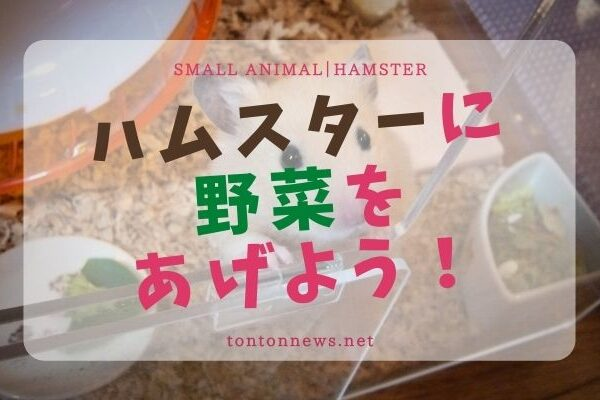 ハムスターの野菜まとめ!良いものダメなものおすすめと疑問も解決!