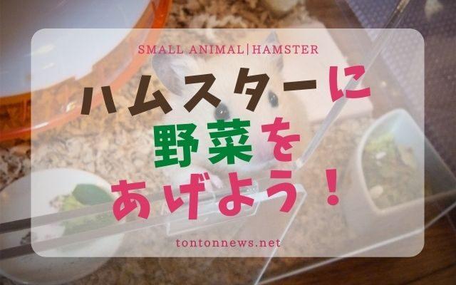 ハムスターの野菜おすすめ6選!OK21種とNG13種も紹介!