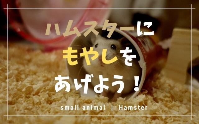ハムスターはもやしを与えてもOK!量や生で良いか等まとめます