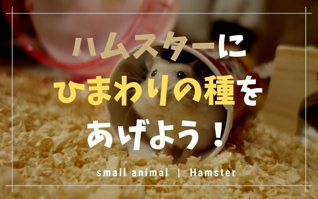 ハムスターはひまわりの種が好き!量や種類など気になることまとめ