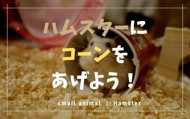 ハムスターはコーン好きです!量や乾燥?など気になることを紹介!