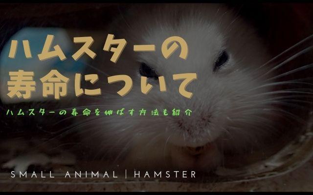 ハムスターの寿命が短いの画像
