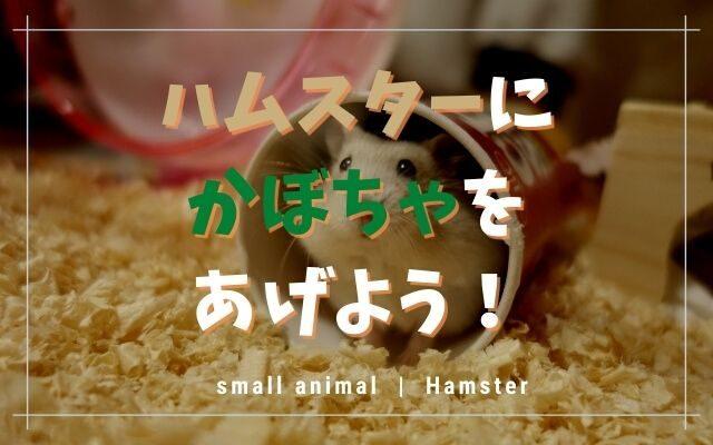 ハムスターはかぼちゃが大好き!与える量や生・茹でる・種など