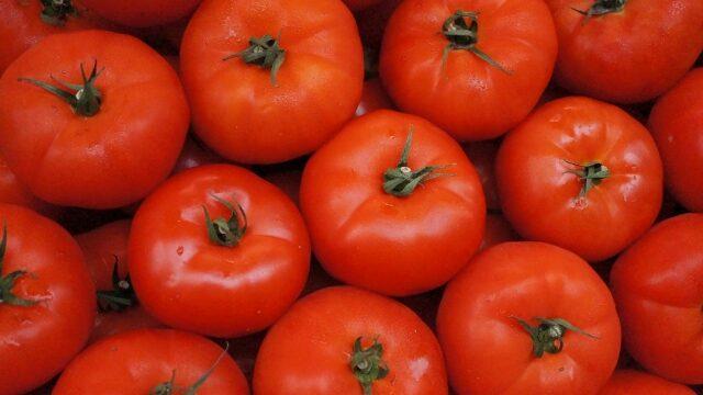 大きなトマトの画像です