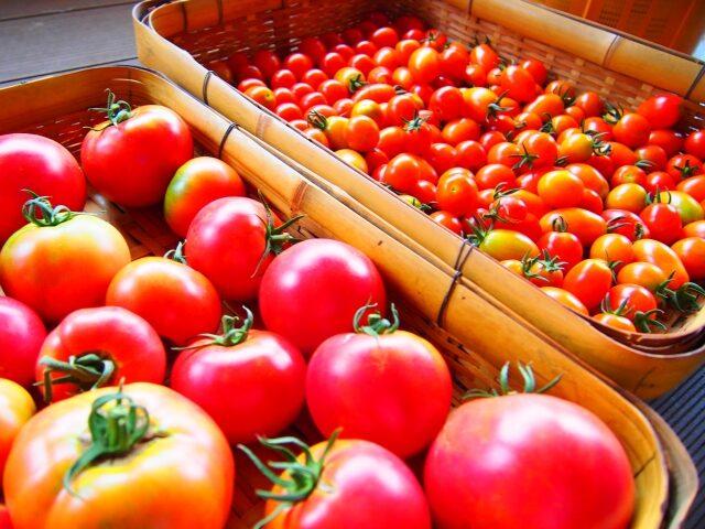 トマトとミニトマトの画像です