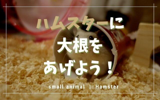 ハムスターは大根を食べられます!与える量など3つの注意点を紹介