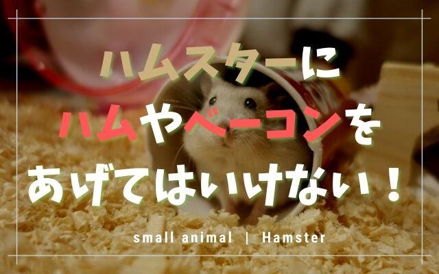 ハムスターにハムやベーコンはNG!理由とおすすめの食べ物を紹介!