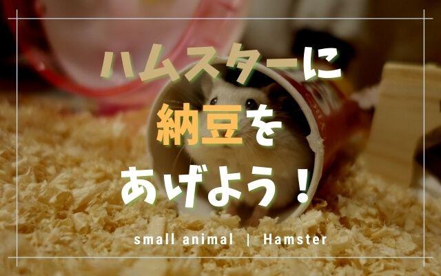 ハムスターは納豆を食べます!与える種類や量・2つの注意点!