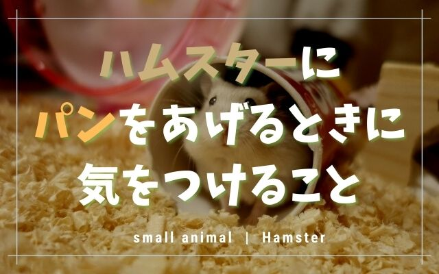 ハムスターはパンを食べますが要注意!OKなパンや与える量を紹介
