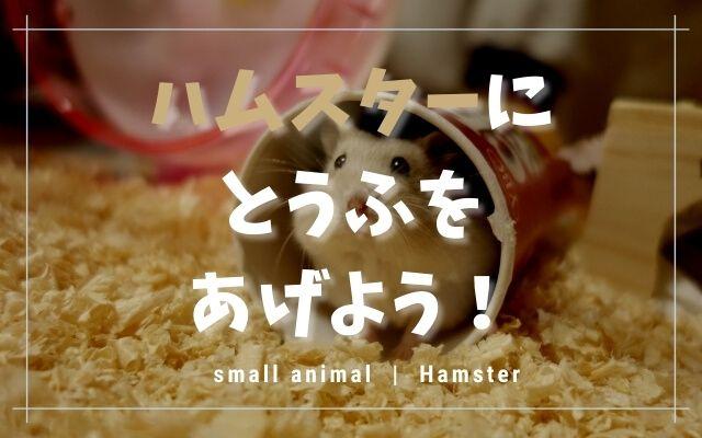 ハムスターは豆腐を食べます!与える量や種類・注意点を紹介します!