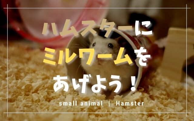 ハムスターはミルワームを食べます!量や頻度・注意点を紹介!