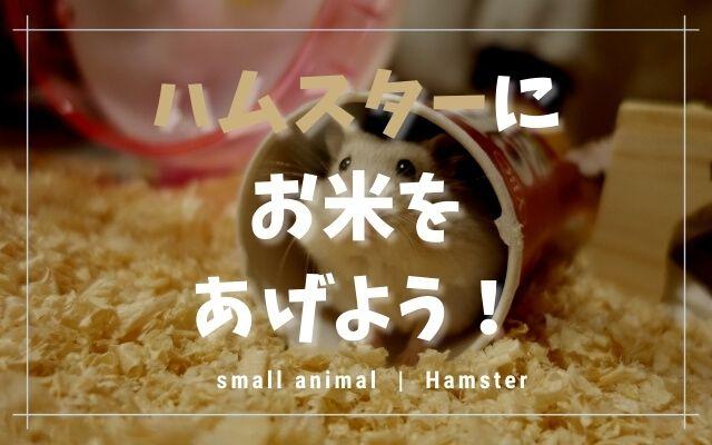 ハムスターはお米を食べる!あげる量や麦やもち米も合わせて紹介